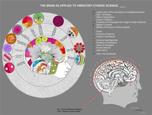 Keely Chart 08 The Brain as Applied to Vibratory Etheric Science  (color)