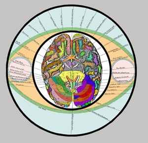 Keely Chart 17 Brain Section in Circle (color)
